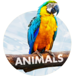 Animals Wallpapers – Free Backgrounds MOD APK